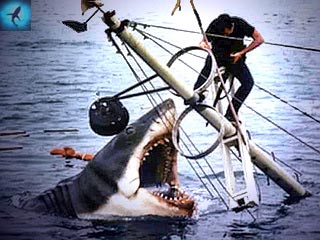 Ребенок акулы как называется
